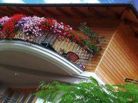 Lättskötta växter till alla lägen för balkongen