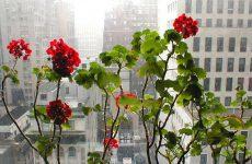 Anpassa blommorna efter fönstrets storlek